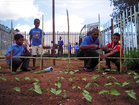 Vegetable garden at Noordgesig Primary School