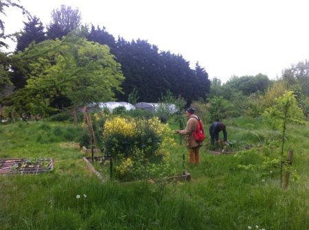 Hackney Marshes Community Garden